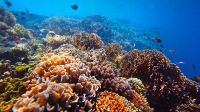 Snorkeling Shipwrecks in Aruba - Shore Excursions Group